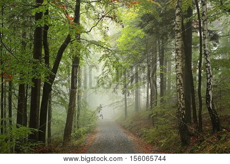 Forest path in misty weather. Poland .