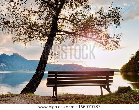 Empty Bench At Autumn Mountain Lake. Coast Under Bended Tree