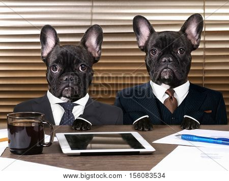 Business dogs in suits at work behind the office table. The concept of manager and subordinate different characters office workers