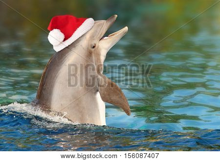 Funny Dolphin with santa cap. Merry Christmas and happy New Year, greeting from tropical paradise