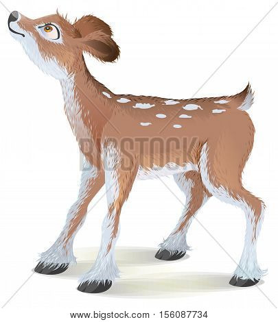 Brown small fawn raised his head up. Isolated on white vector cartoon illustration