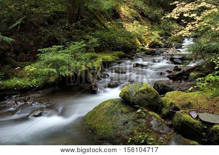 Pacific Northwest forest stream with mossy rocks and fall color