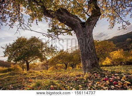Autumn Orchid Meadow In Autumnal Sunset Light