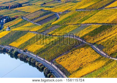 Detail view on autumn colorful Moselle vineyards Landscape