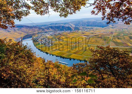 Autumn Colorful Moselle and Vineyards Panorama Landscape