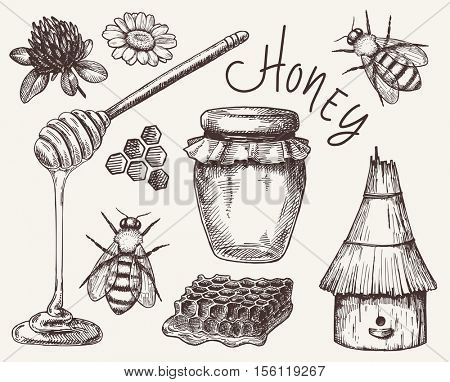 vector honey elements set. hand drawn honey jar, spoon, stick, cells, camomile. ink sketch of organic nature products