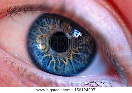 Macro Image Of Eye. Beautiful Eye Close Up