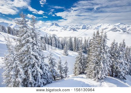 Trees covered by fresh snow in Austria Alps from Kitzbuhel ski resort - one of the best ski resort in the workd with 54 cable cars 170 km prepared skiing slopes and place of famous hahnenkamm races.
