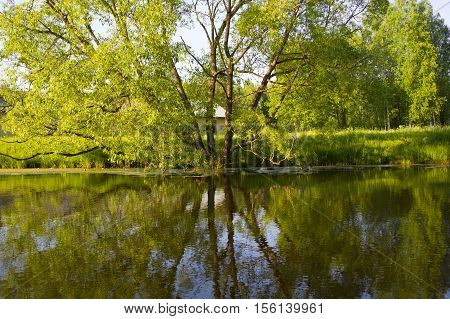 Reflection of trees in water. Nature in beautiful bloom near the water. Background for the walls.  Idyllic views of nature. Branchy big tree. Peaceful rural view.