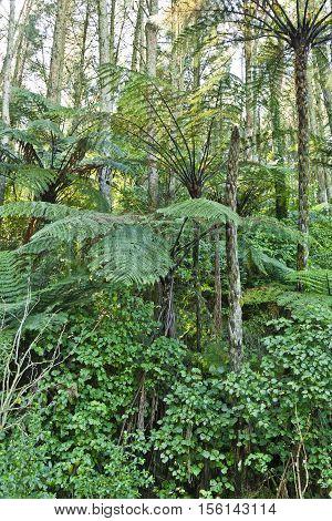 New Zealand Native Bush trees and ferns