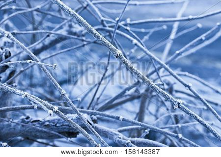Cold Winter Frosted Tree Background