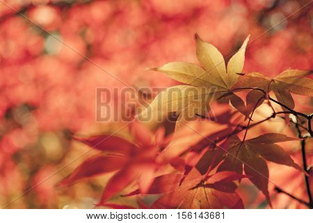 Nature background with bright autumn fall leaves