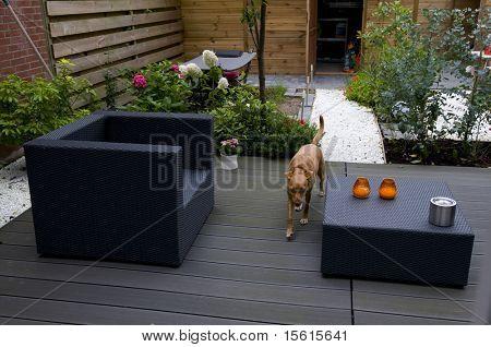 Brown dog in modern garden
