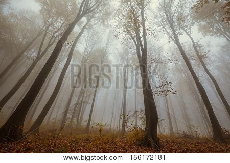 Misty Forest Shoot At Wide Angle