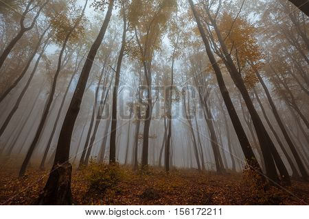Road At Misty Forest