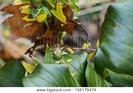 Autumn flower in the forest with leaves changing color nature season flora botany macro closeup bud petals forest plant