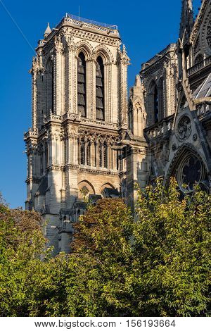 Architectural detail (French Gothic) of Notre Dame de Paris Cathedral tower in Summer morning light. Ile de la Cite, 4th Arrondissement, Paris, France