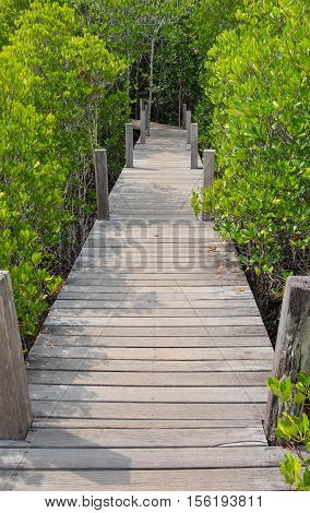 Wooden walkway bridge with Ceriops Tagal field in mangrove forest it called