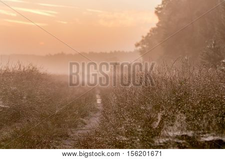 a path covered with morning dew on the heath