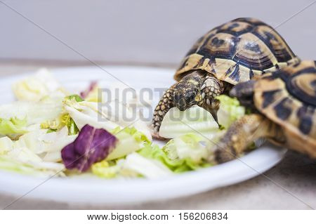 Turtles Have Lunch