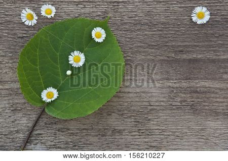 Green leaf with little white flowers on a wooden background. Picked blossoms. Clear space for your ideas.