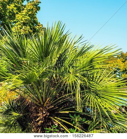 Palm Tree Leaves Hdr
