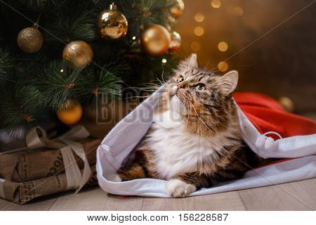 Tabby And Happy Cat. Christmas Season 2017, New Year