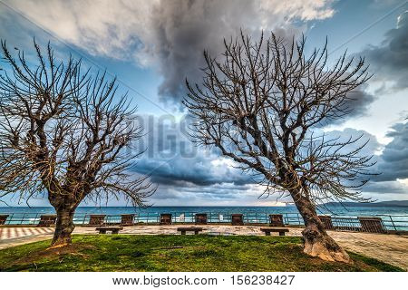 dry trees in Alghero seafront in Italy