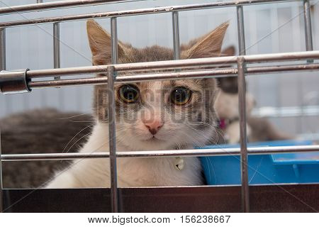 Young cat sitting in a cage. Pets