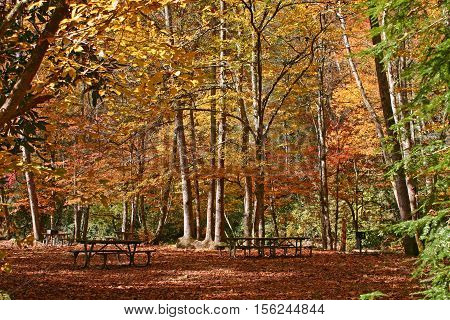 a pair of picnic tables in the shade under colorful autumn trees