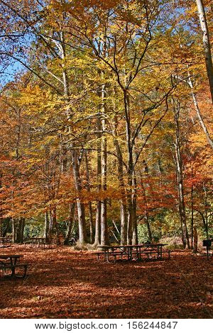 a picnic area in the shadows of colorful autumn foliage