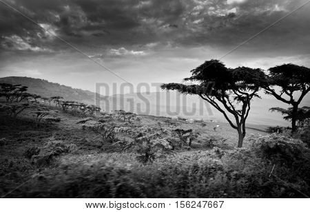 Landscape of Ngorongoro crater area in Tanzania, Africa - black&white image
