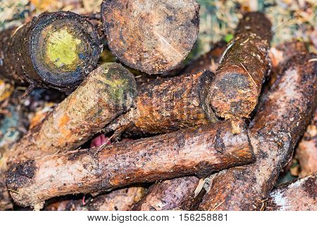 Stack with firewood sawn off image for nature business concept