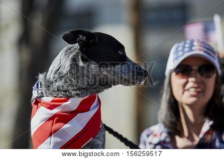 Dog As A Spectator At Veterans Day Parade
