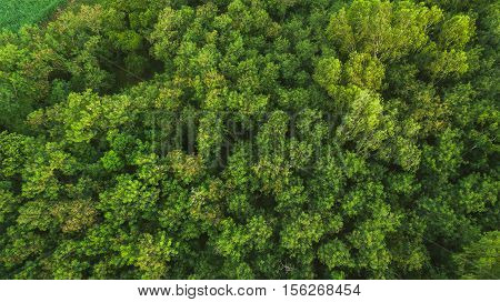 forest Trees top view texture and background .