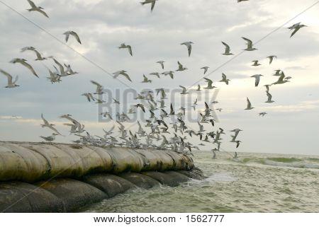Seabirds Taking Flight