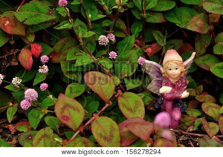 A fairy sitting in a field of small pink flowers