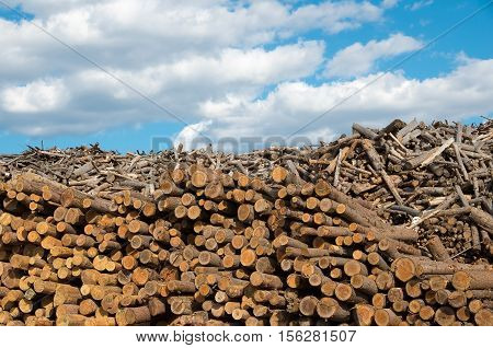 Lumberyard. Logging. Industry destructive nature. Material for the production of cellulose. Natural resource materials and energy.