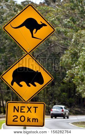 Sydney Australia - OCT 23 2016:Car pass a warning road sign to beware of Kangaroo and Wombat. Hundreds of thousands of wild animals are killed each year after being hit by motor vehicles on Australian roads.