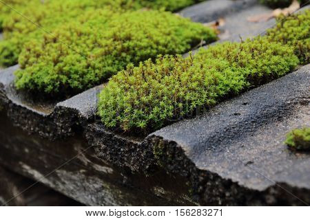 roof is covered with green moss on the village house