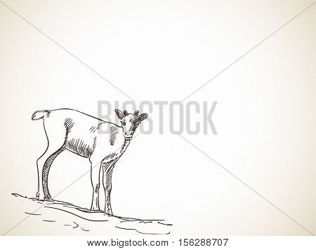 Sketch of reindeer fawn isolated Front view Hand drawn vector illustration