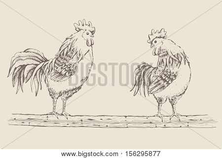 Vector illustration - sketch and broody. Series of farm animals. Graphics handmade drawing Rooster and hen. Vintage engraving style. Isolated chicken birds are sitting on a tree branch