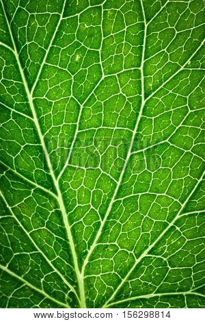 abstract background or texture detail on green leaf capillaries