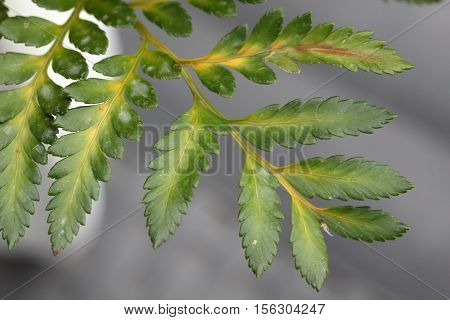 Fern / Fern growing in the forest
