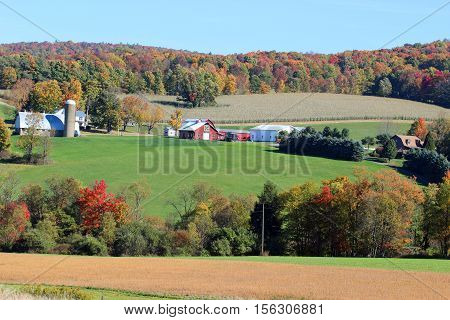 A barn and buildings with fall colors and a cornfield in the background.