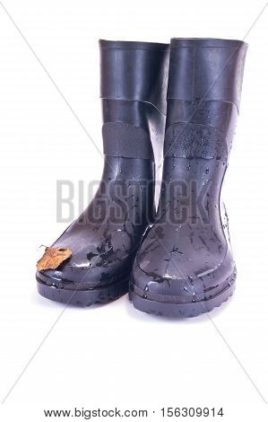 Rubber knee-boots are isolated on a white background