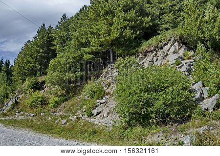 Green forest on  rocky  hill  and road near by hija or rest-house Aleko in Vitosha mountain, Bulgaria