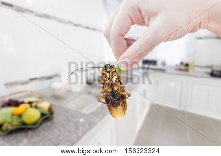 Woman's Hand holding cockroach on kitchen background eliminate cockroach in kitchen