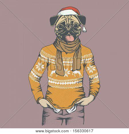 Pug dog vector illustration. Pug dog in human sweater or sweatshirt