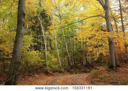 Path through the autumn forest. Poland .